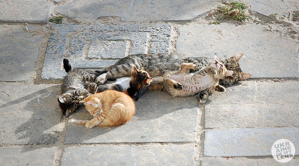 Одесские коты