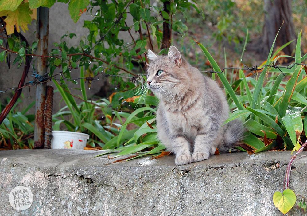 Коты в Балаклаве