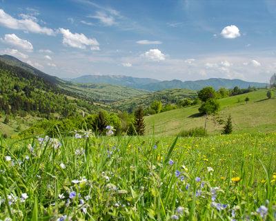 Цветочная поляна в горах